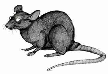 A Rat in Black